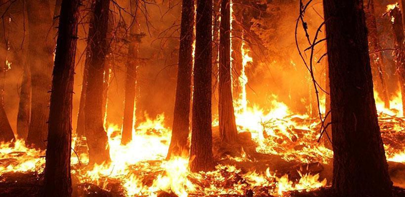incendio-forestales-argentina